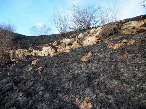 incendio-monte-rai-malascarpa-22
