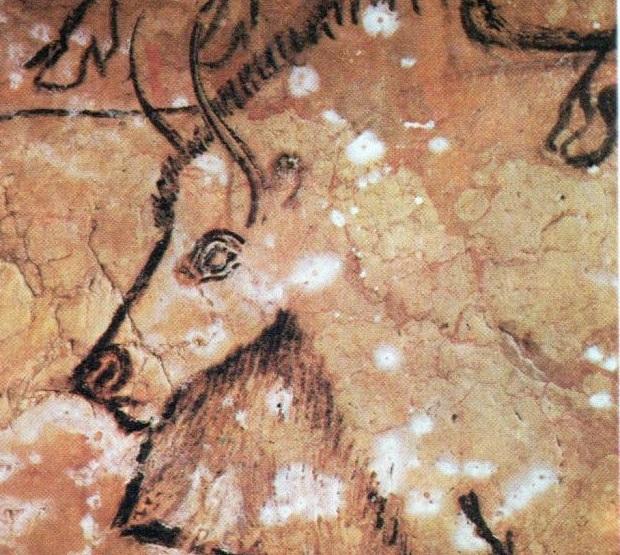Scuole mostra sul paleolitico al civico museo di erba - Liceo carlo porta erba ...